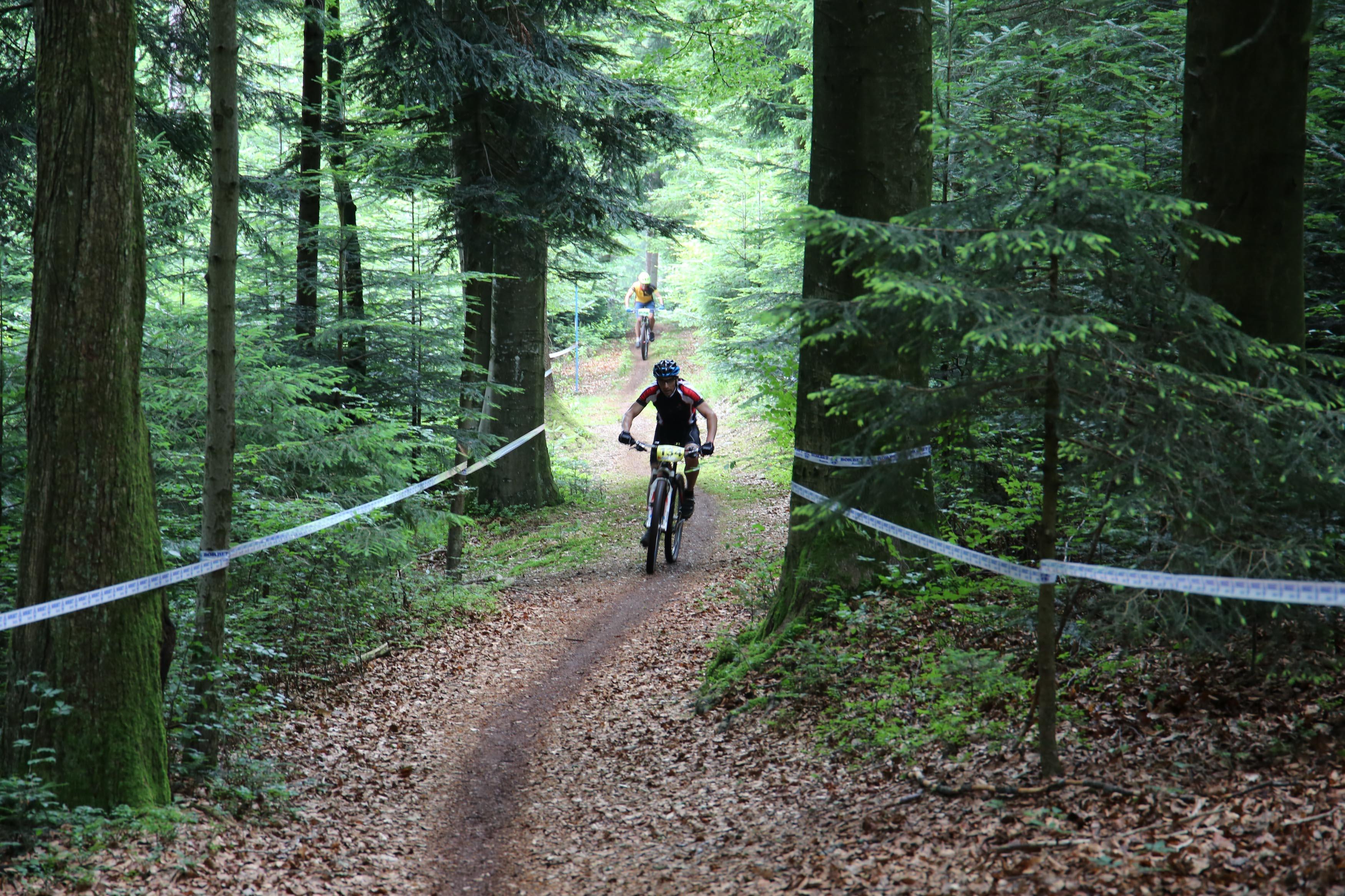 Strecke-Wald
